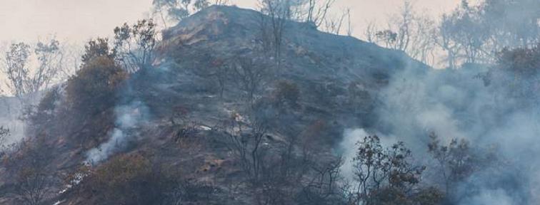 Peligro de aumento de incendios foretales  en Colombia para el 2020