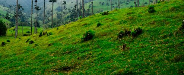 Colombia país sede del Día Mundial del Medio Ambiente 2020